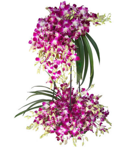 send flower Sagarpur Delhi2 Layer Arrangement of 40 Orchids