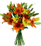 send flowers to Ashok-Vihar