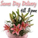 Same Day Flowers and Cakes to Delhi