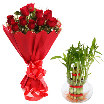 12 Red Roses bunch with Lucky Bamboo